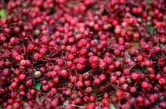 grains de poivre rouges frais Photographie stock