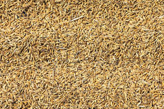 Grains de riz Photo libre de droits