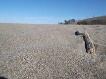 Grains de sable/bois de flottage Photographie stock