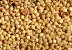 Grains de sorgho Photographie stock libre de droits