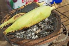 Grains doux grillés sur le brasero chaud de charbon de bois Images stock