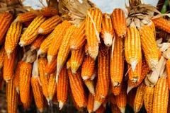 Grains doux jaunes organiques crus Images stock