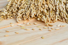 Grains, ear of rice on the wooden background, copyspace for text Royalty Free Stock Photography