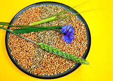 Grains and Ears. Pattern made of grains of wheat, rye and spelt with ears from wheat and barley and a cornflower Stock Photos