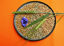 Grains and Ears. Pattern made of grains of wheat, rye and spelt with ears from wheat and barley and a cornflower Royalty Free Stock Image