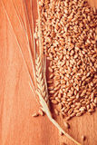 Grains and ears of wheat Stock Photo
