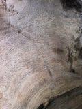 Grains en bois naturels Photos stock
