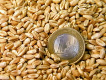 Grains and euro Royalty Free Stock Photo