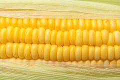 Grains frais de maïs avec des gouttelettes d'eau Photographie stock