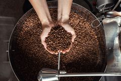 Grains of fresh coffee roasting in hands on the background of the roaster.  stock photo