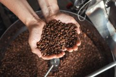 Grains of fresh coffee roasting in hands on the background of the roaster.  stock photos