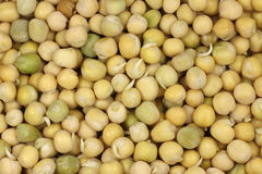 Free Grains Germinated Pea Background Stock Images - 39062704