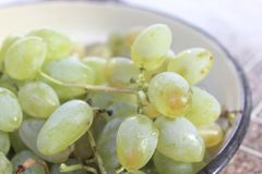 grains grape for wine royalty free stock images