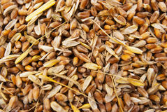 Grains. Heap of grains as background Royalty Free Stock Images