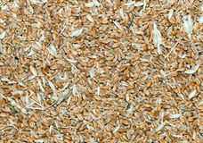 Grains with husk Royalty Free Stock Photo