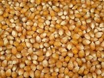 Grains jaunes de maïs éclaté Photos stock
