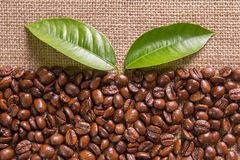 Grains and leaves coffee Stock Photo