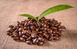 Grains and leaves coffee Royalty Free Stock Photos