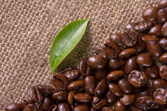 Grains and leaves coffee Stock Photography