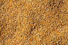 Grains of maize Royalty Free Stock Images