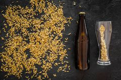 Grains of malting barley near beer bottle on black background top view.  Royalty Free Stock Photos