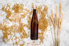 Grains of malting barley near beer glass and bottle on grey background top view. Grains of malting barley near beer glass on grey background top view Royalty Free Stock Images