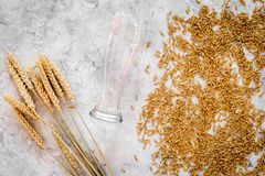 Grains of malting barley near beer glass on grey background top view.  Royalty Free Stock Images