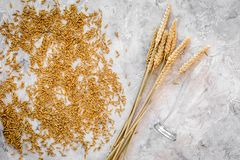 Grains of malting barley near beer glass on grey background top view.  Royalty Free Stock Image