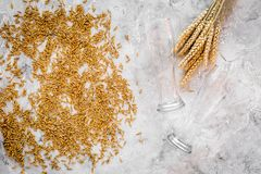 Grains of malting barley near beer glass on grey background top view.  Stock Photo