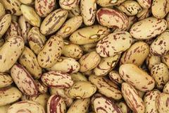Grains mung bean  background Royalty Free Stock Photo