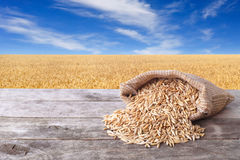 Grains of oat with field. Grains of oat on wooden table with field on the background. Ripe field, blue sky with beautiful clouds. Uncooked porridge. Grain oats Royalty Free Stock Photography
