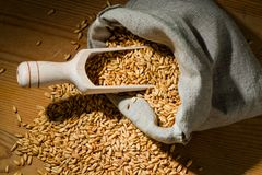 Grains of oats Stock Image