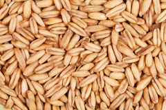 Grains of oats as background Stock Images