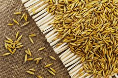 Grains of oats on the background of jute. Grains of oats on  background of jute Royalty Free Stock Photo