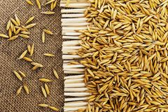 Grains of oats on the background of jute. Grains of oats on background of jute stock photo