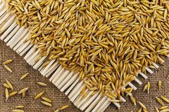 Grains of oats on the background of jute. Grains of oats on  background of jute Stock Photography