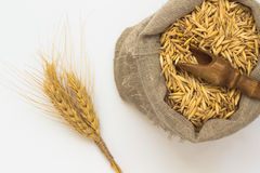 Grains of oats in  bag. Wooden spoon. Twig barley Royalty Free Stock Photos