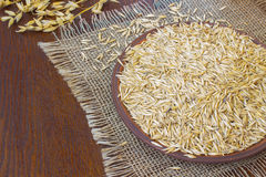 Grains of oats on a ceramic plate. Sprigs of oats on a table Royalty Free Stock Photography
