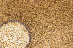 Grains of oats close up. Ground oats in  box Stock Image