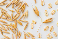 Grains of oats, oatmeal and oat branch on a white Royalty Free Stock Photos