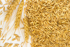Grains of oats and wheat spikelets Royalty Free Stock Images