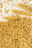 Grains of oats and wheat spikelets Stock Photography