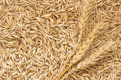 Grains of oats and wheat spikelets. Top view Stock Photo