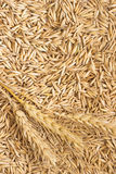 Grains of oats and wheat spikelets. Top view Royalty Free Stock Image