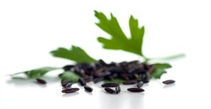 Free Grains Of Black Unpolished Rice With A Sprig Of Parsley Stock Photography - 163492702