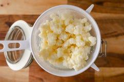 Grains probiotic organiques de képhir de lait Photographie stock libre de droits