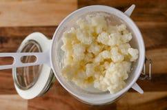 Grains probiotic organiques de képhir de lait Image libre de droits