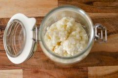 Grains probiotic organiques de képhir de lait Photos libres de droits
