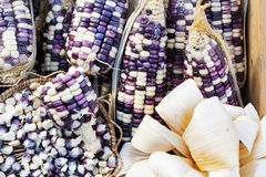 Grains purple corn Royalty Free Stock Images