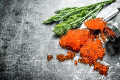 Grains of red caviar with salt and dill. On black rustic background royalty free stock photography